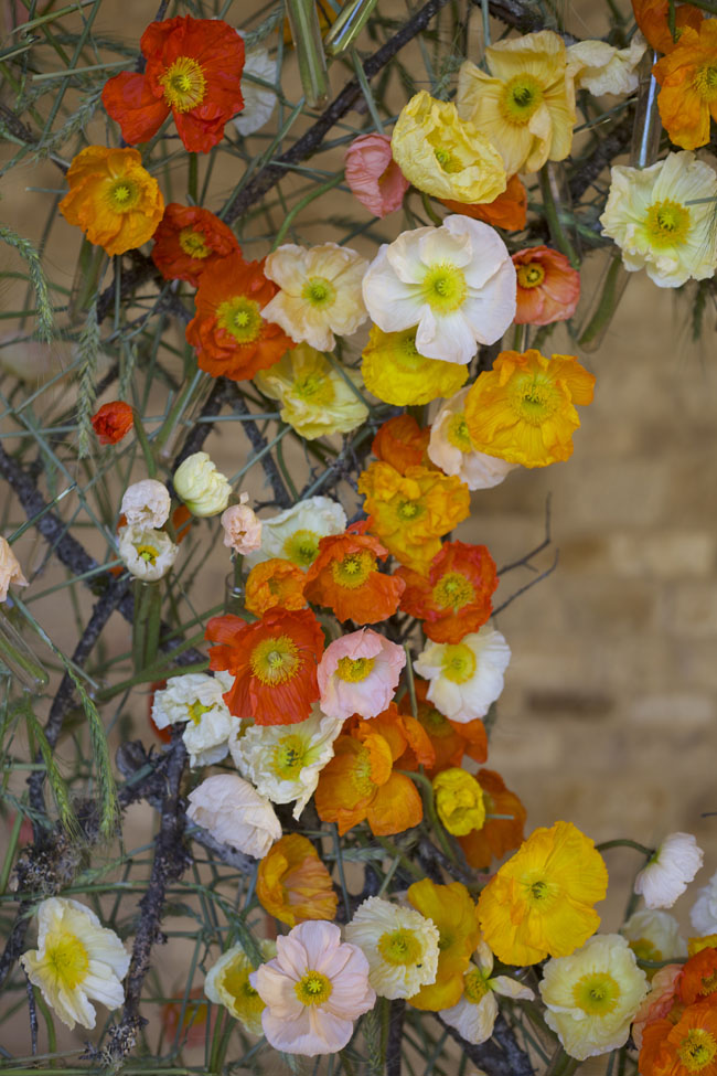 Florabundance Design Days & Chapel Designers Conference - Poppies