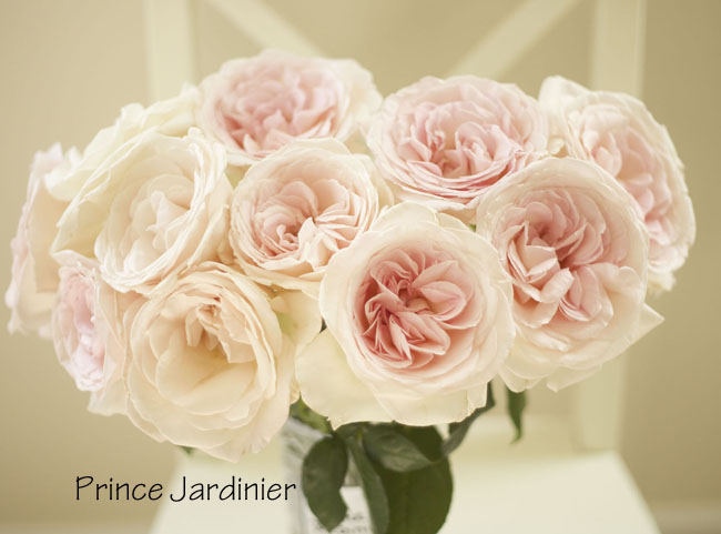florabundance prince jardinier large pale blush pink garden rose bouquet - Blush Garden Rose Bouquet
