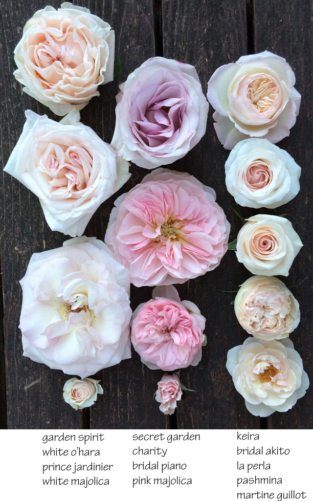 The Blush Pink Rose Study | Flirty Fleurs The Florist Blog ...