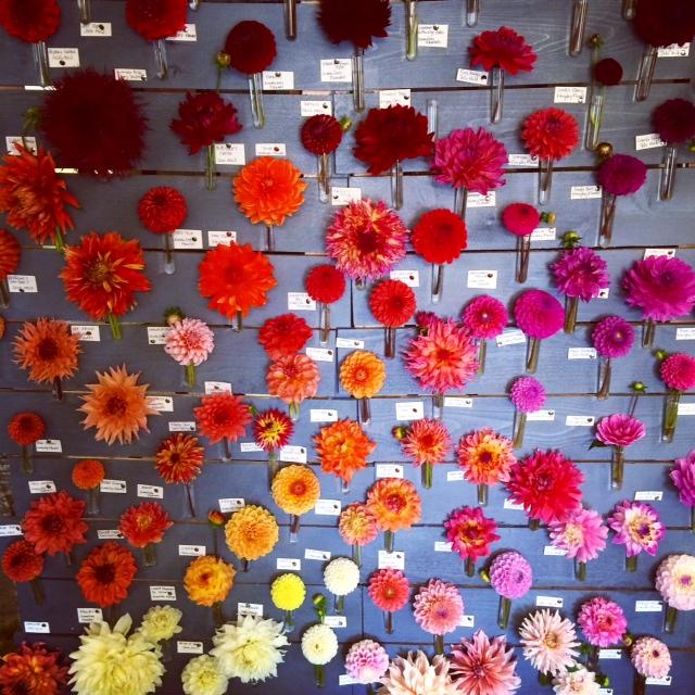 Seattle Wholesale Growers Market - Dahlia Display