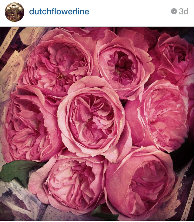 Dutch Flower Line on Instagram