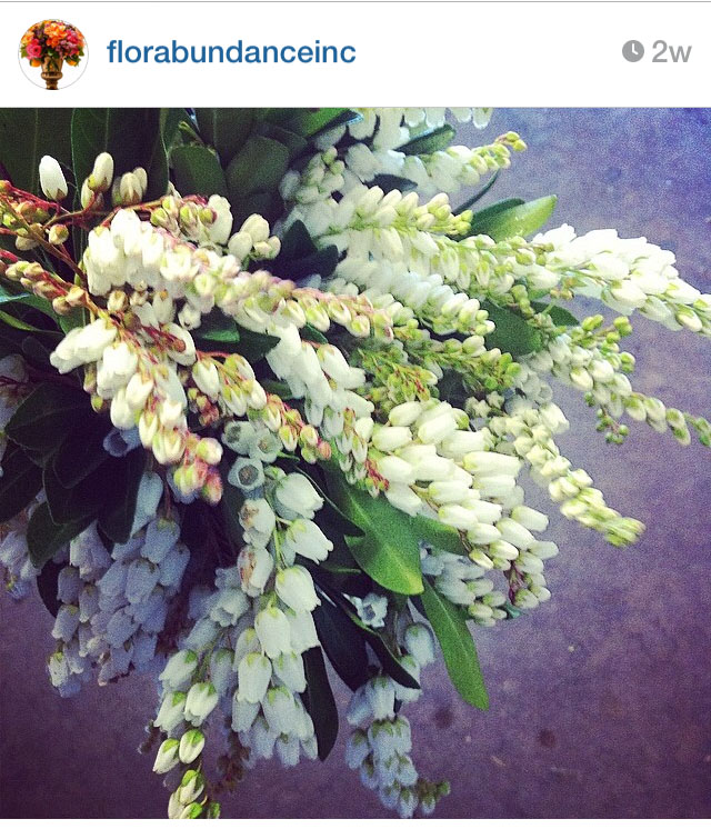 Florabundance Wholesale on Instagram
