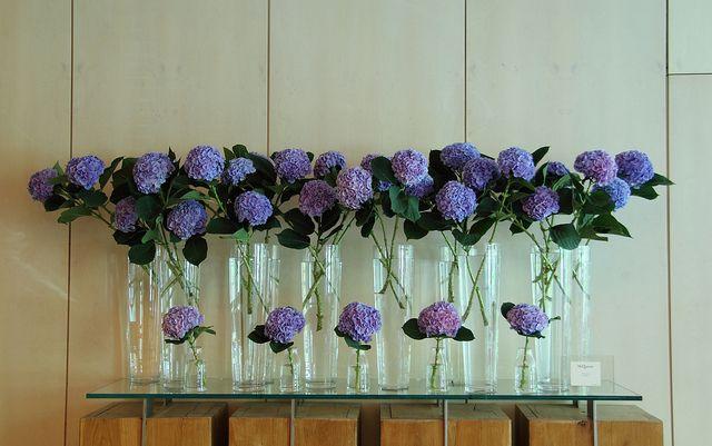Ken Marten - blue hydrangea