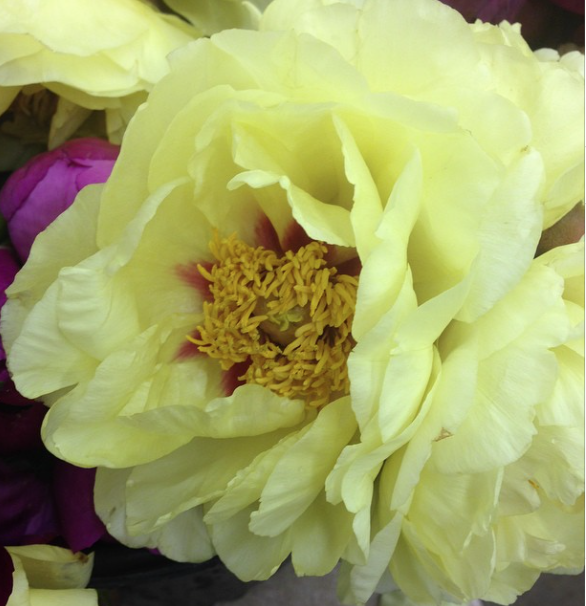 Brannan Street - Yellow Tree Peonies