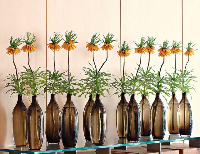 Crown Imperial Fritillary, Ken Marten
