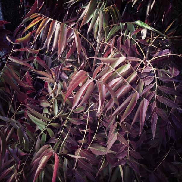 Dutch Flower Line - Fall Foliage