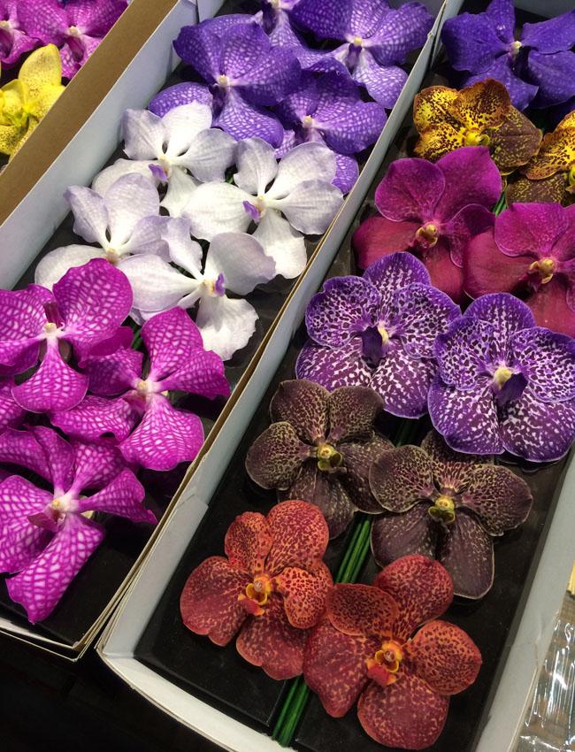 Anco Pure Vanda Orchids