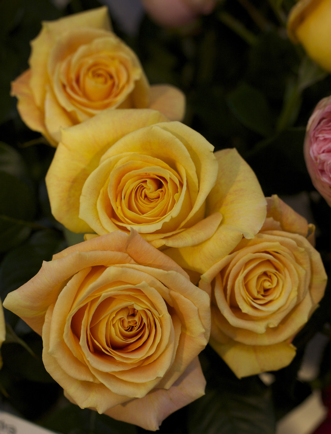 Candlelight Garden Roses