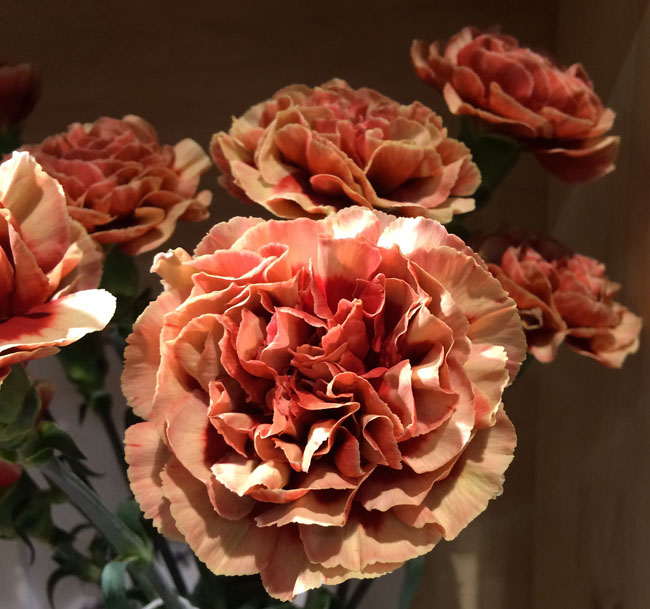 Fabulous Carnations