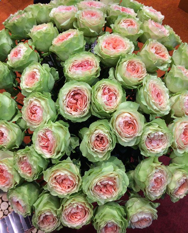 Gravity Roses