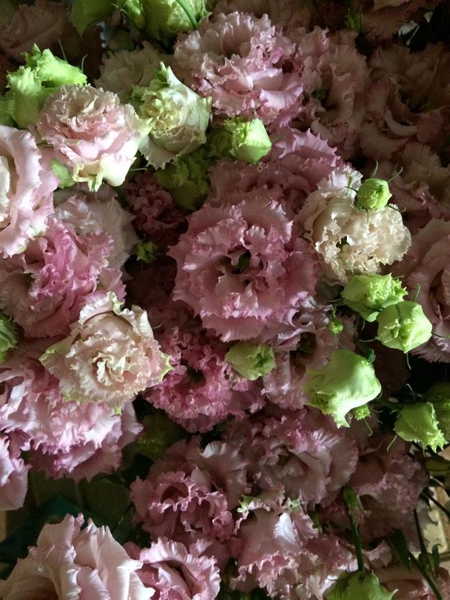 Ruffled Pink Lisianthus