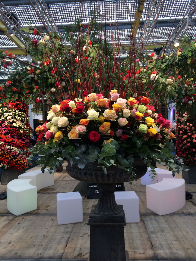 DeRuiter Rose Display