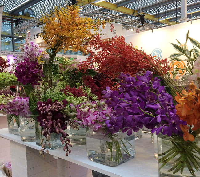Orchid Display at IFTF