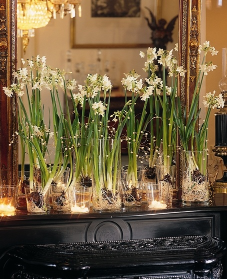 paperwhites on the mantle
