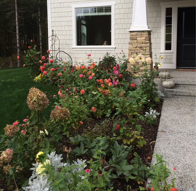 Garden with dahlias and zinnias
