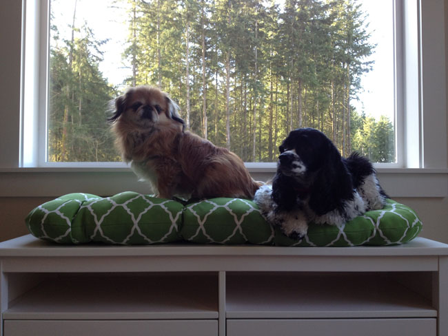 Pekingese and Cocker Spaniel