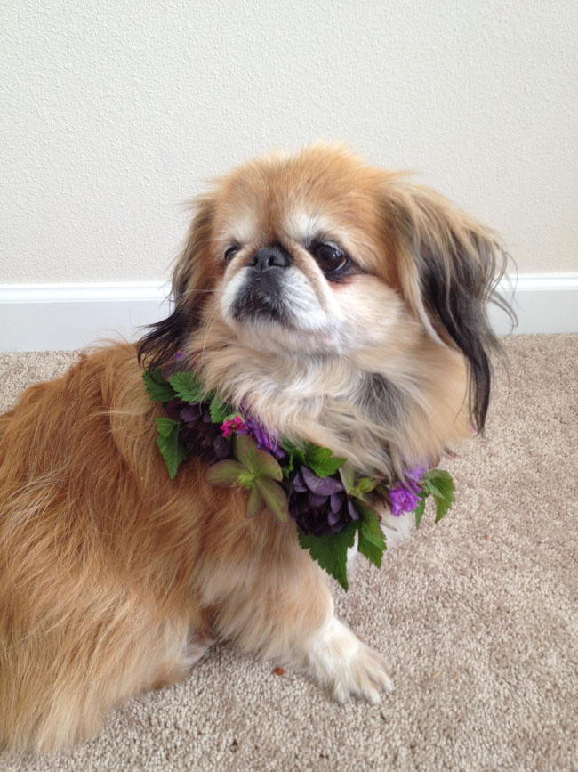 dog with a flower collar