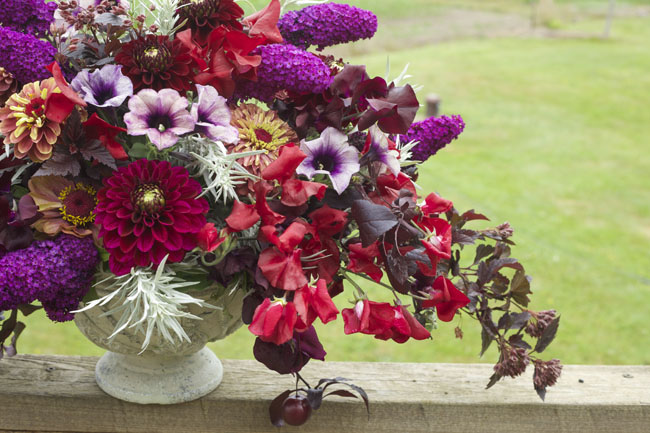 Bella Fiori - purple and burgundy flower arrangement with dahlias, petunias, butterfly bush, sweetpeas and zinnias