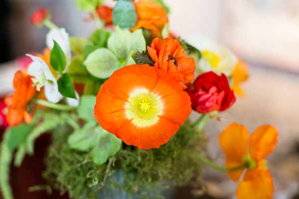 Bash and Bloom - orange poppies and green hellebores