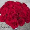 Red Rose Study