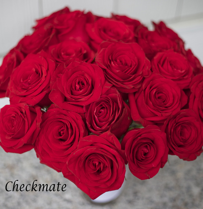 Checkmate Red Rose