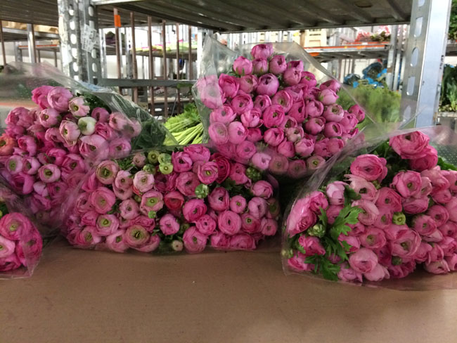 Holex Flower Holland - Pink Ranunculus