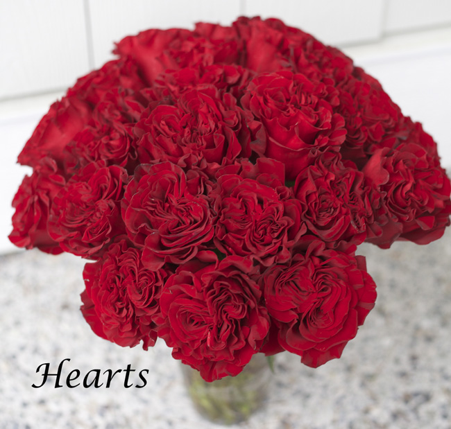 Hearts Red Rose by Nevado Roses