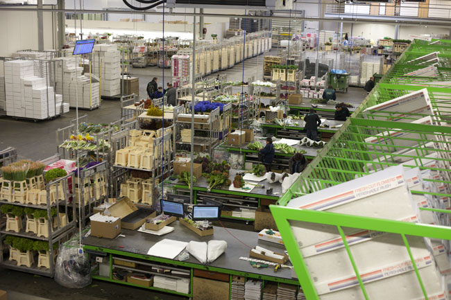 Holex Flower Holland - packing flowers for shipping
