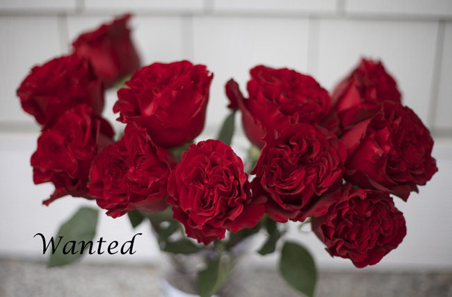Wanted Red Rose by Alexandra Farms