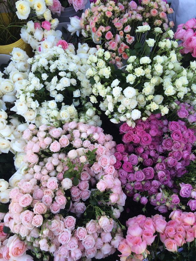 Florbundance Roses