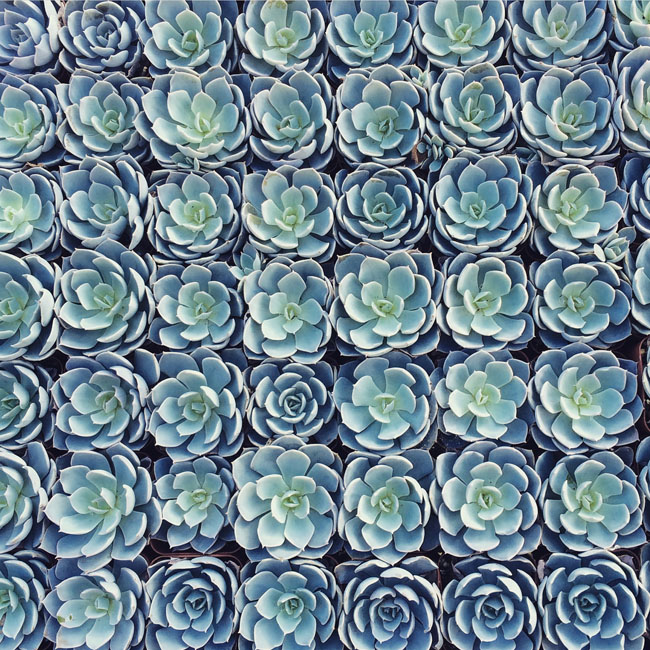 flat of succulents
