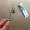 Tillandsia: The Allure of Air Plants for Floral Design