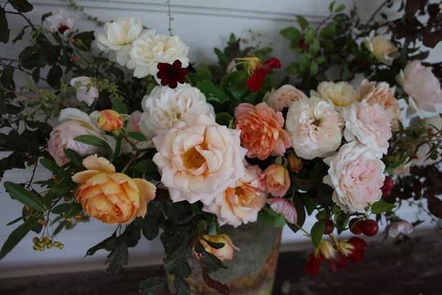 Jardine Botanic -  garden roses