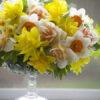 Flower Focus :: Daffodils