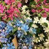 Flower Focus :: Tweedia