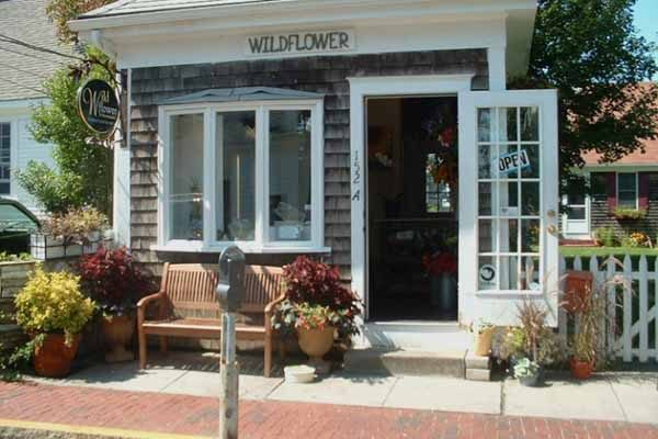 Wildflower of Provincetown