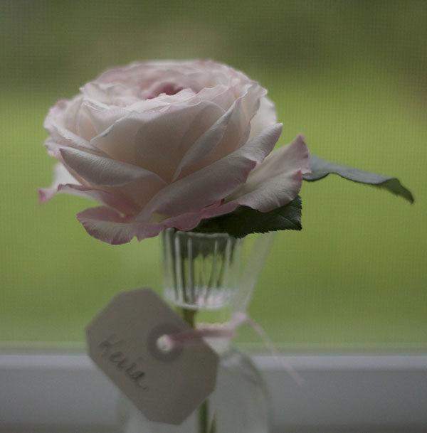 Keira David Austin Garden Rose