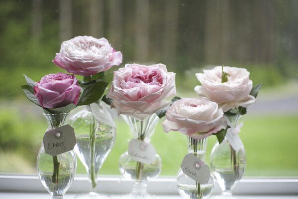 Pink David Austin Garden Roses Carey, Constance, Miranda, Keira, Charity