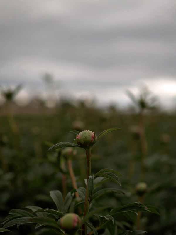Blooming of Beloit, Wisconsin Flower Farm