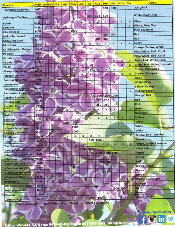 Blooming of Beloit