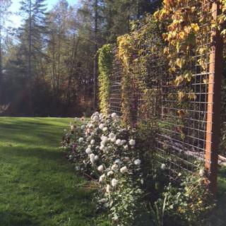 bella fiori garden