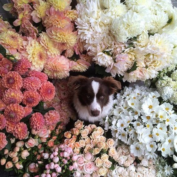 Jardine Botanic - dog surrounded by flowers