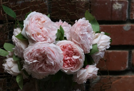 St. Swithun - David Austin Roses - Pink Garden Roses Grown by Fleurie