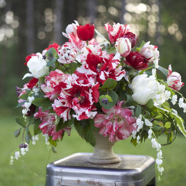 Bella Fiori - Flirty Fleurs - Longfield Gardens - Arrangement of red and white parrot and double tulips