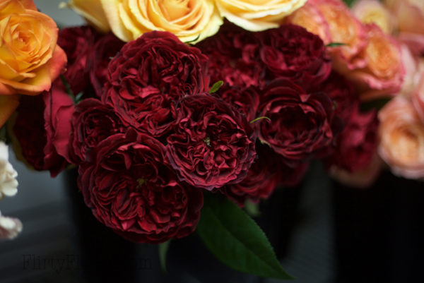 Tess by David Austin - Alexandra Roses Via Garden Roses Direct