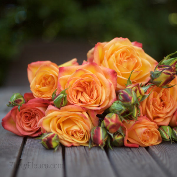 Fiction garden rose - Alexandra Roses Via Garden Roses Direct