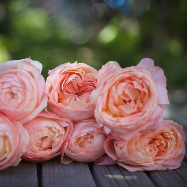 Princess Aiko Garden Rose - Alexandra Roses Via Garden Roses Direct