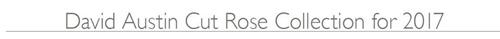 David Austin Garden Roses – 2017