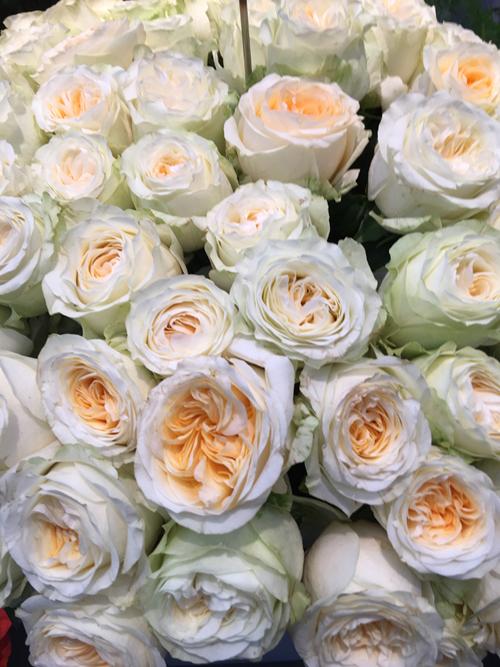Buttercup Garden Roses