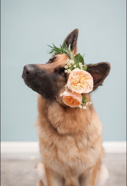 german shepherd wearing flowers